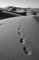 desert-walk.jpg