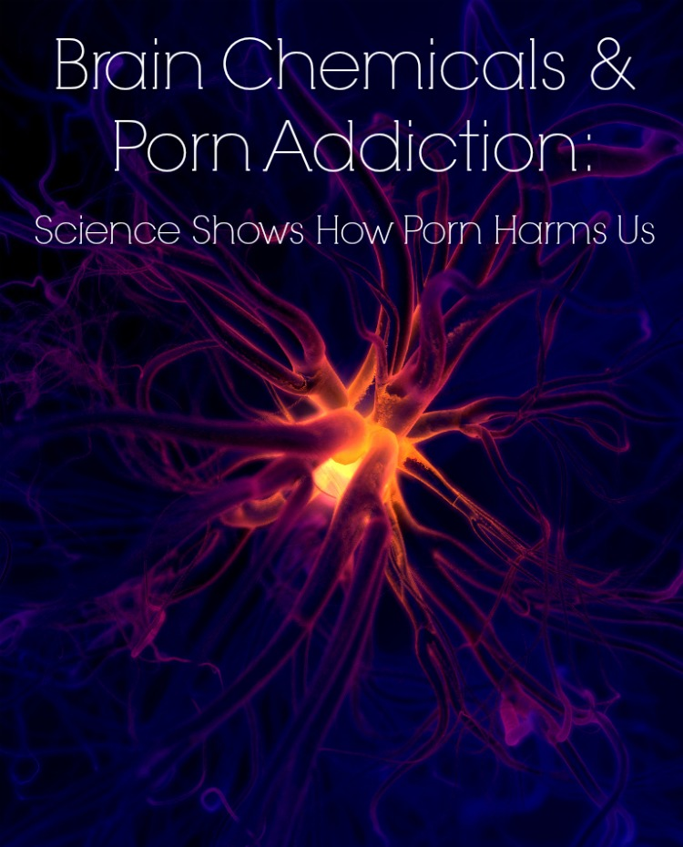 Porn and the brain