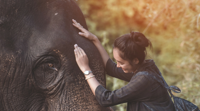 woman hugging elephant